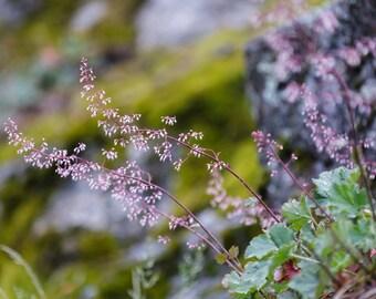 Small Purple Flower Photograph | Fine Art Photograph | Home Decor | Botanical Nature Photograph