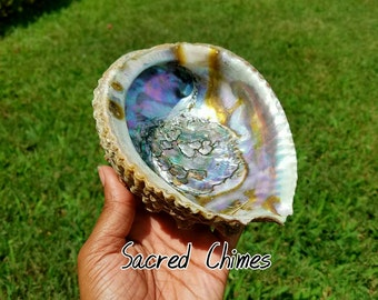 Large 7 inch Abalone Shell