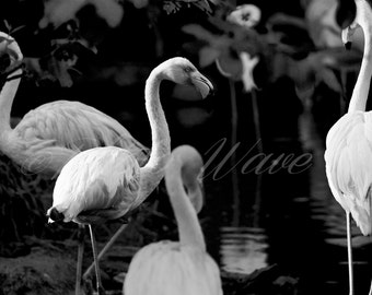 ANIMALsoul PINK FLAMINGOS: pink flamingos, fine art photography, fine art, nature photography, wonderfull nature, bird photos