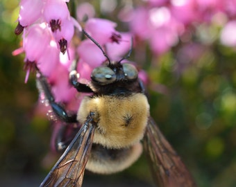 Bee In Spring Photograph #38