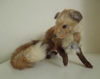 Spiritka- large foxy marten