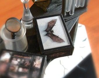 miniature  BAT SHADOW BOX  - taxidermy - victorian steampunk gothic -  Printable Instant Digital download - 1:12 / 6