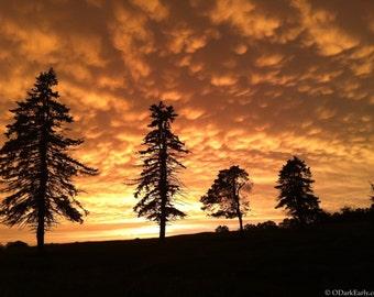 Evening Mammatus Clouds