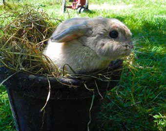 Bunny in a Bucket