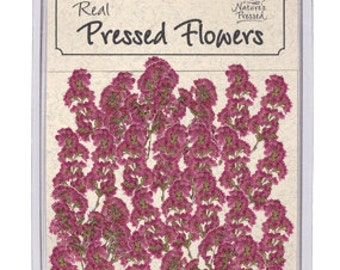 Pressed Dried Heather - 25 piece pack