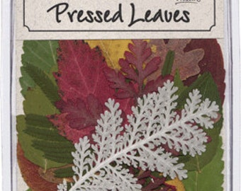 Pressed Dried Assorted Fall and Green Leaves  20 Pieces