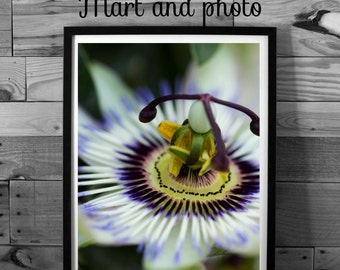 Flower photography, color photography, nature photography, macro, instant download, printable art, home decor