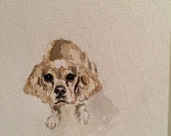 Puppy Portraits!