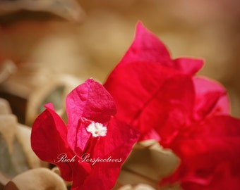 Red Bougainvillea 1, wall art, nature