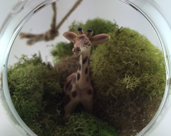 Giraffe Moss Terrarium