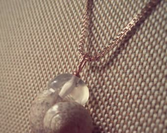 Rose Gold Sea Shell Necklace