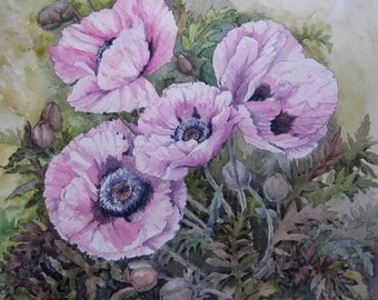 Original Watercolor Pink Poppy Flower