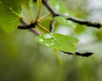Wet Morning Leaves