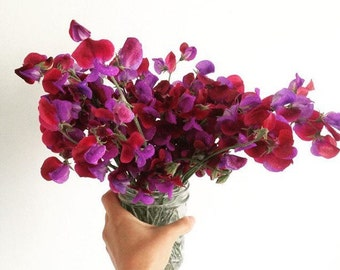 Sweetpeas seeds Cupani's Original / FREE SHIPPING / orchid & violet color/ 20 seeds / sweet peas