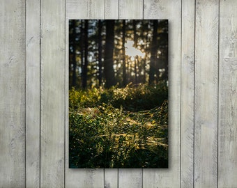 Green Forest Print Living Room, Nature Photography, Large Canvas Wall Art Prints, Forest and Trees Nature Wall Decor