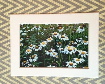 daisy garden picture