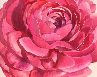 Watercolor Flowers, Red Ranunculus, Painting, Watercolor Art, Original artwork