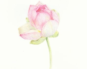 Flower Drawing- Botanical Art- Gift for her- Lotus art- Gift for Mom- Colored pencil drawing- Original Art- Lotus