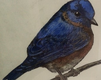 Bluebird aquatint etching