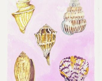 My Favorite Shells