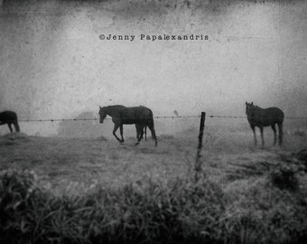 Horse Series_IX