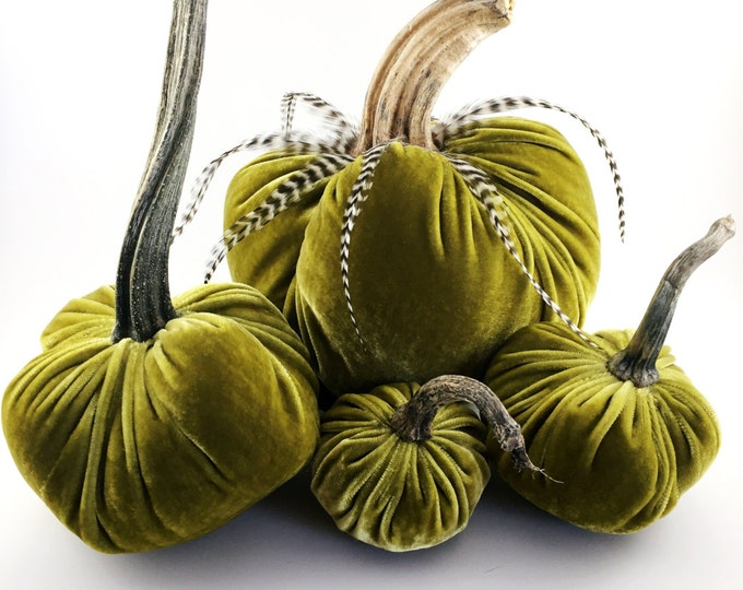 Featured listing image: Golden Green Velvet Pumpkins with Real Pumpkin Stems and Feathers