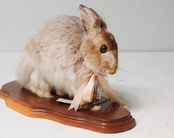 Taxidermied Rabbit