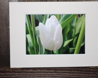 READY TO SHIP: 5x7 Matted Tulip Print