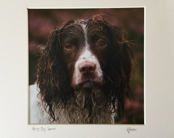 Rainy Day Spaniel - Photographic Print
