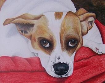 Stella-sample dog portrait