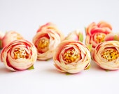 10 MINI Ranunculus Buds in Cream and Bright Pink - silk artificial flower, millinery flower, small flower, flower crown supply - ITEM 0509