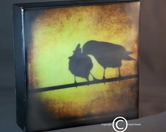 Gold Yellow Crows Encaustic Photograph--Two Crows Grooming--on 8x8 Wood Panel
