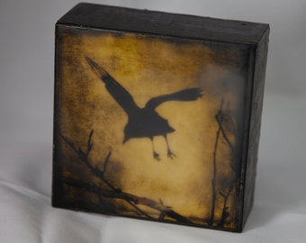 Gold Black Crow Encaustic Photograph on Wood Panel--Black Crow Taking Off--4x4 Fine Art