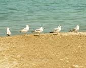 40% OFF SALE Beach Photography, Seagulls, Nature, Birds, Ocean Photo, Blue, Nautical Decor, Brown, Tan, Sand, 8x8 inch Print - The Little Fi