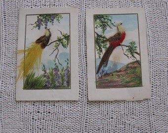Vintage Feather Bird Pictures - Bird Watercolor Pictures