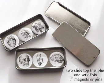 Anatomy Stocking Stuffer fridge magnets set button pins male nurse gift grab bag office staff thank you coworker doctor physician assistant