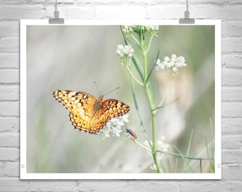 Golden Butterfly Photograph, Insect Art, Butterfly Print, Nature Photography, Butterfly Art, Floral Art, Serene Art, Soft Nature