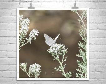White Butterfly Photo, Butterfly Art Print, Nature Photography, Black and White, White Flowers, Square Art Print, Fine Art Photography