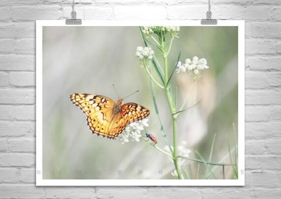 Golden Butterfly, Nature Photography, Insect Art, Butterfly Art, Floral Art, Serene Art, MurrayBolesta