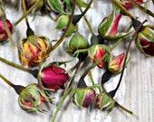 Dried Rose Buds - Dried Roses - Mini Roses - Dried Flowers for Potpourri - Wedding Decorations - Soap Additive - Wedding Toss