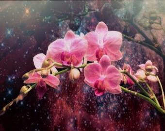 Orchids In Starlight Digital Art