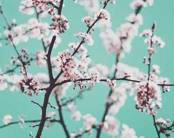 Nature Photography, Mint Green, Botanical Print, Garden Home Decor, Fine Art Photography, Home Decor, Blue Green, Spring Blossoms Print