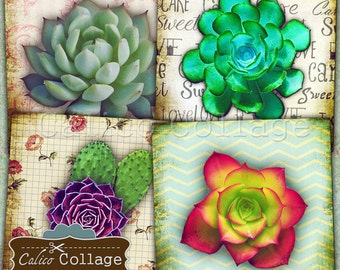 Succulents Digital Collage Sheet 4x4 Inch Coaster Images, Printable Images for Coasters, Decoupage, Scrapbooking, Card Making, CalicoCollage