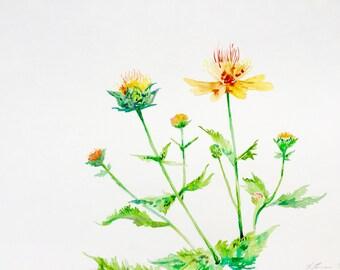 Watercolor Painting, Orange Flowers, Original Art, Botanical