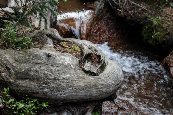Curvy Craggs Creek—Photo Print or Canvas Gallery Wrap