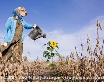 Saving Grace, original large photograph of Boxer dog wearing clothes and watering a lonely sunflower plant in field