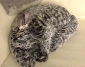 A Grey Wave Velvet Cat