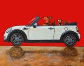 184 Mini Cooper cabrio and Bibi - folded art card 15x15cm/6x6inch with envelope