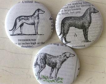 Deerhound Vintage Dictionary Illustration Magnet Set of 3