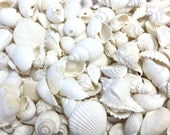 "White Shell Mix - 1 lb. (40 pcs.) 1.5"" - 2"" Natural White Seashells - Beach Weddings - Beach Parties - Beach Table Decor - Bulk White Shells"
